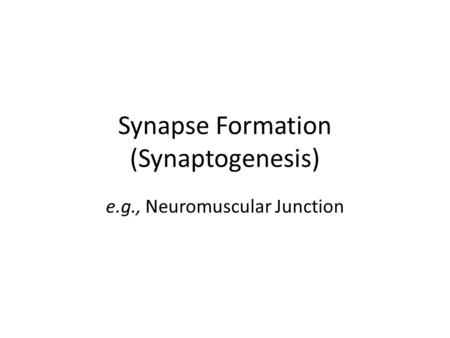 Synapse Formation (Synaptogenesis) e.g., Neuromuscular Junction.
