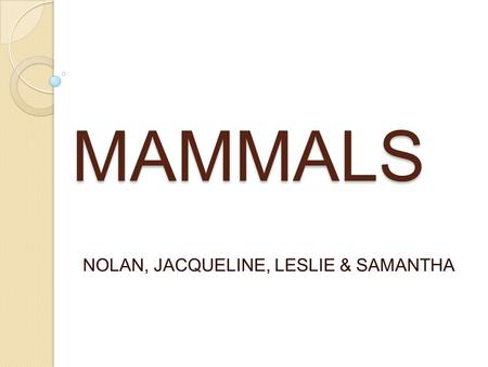 MAMMALS NOLAN, JACQUELINE, LESLIE & SAMANTHA. WHAT IS A MAMMAL WHAT IS A MAMMAL?- A WARM BLOODED VERTEBRAE ANIMAL OF A CLASS THAT IS DISTINGUISHED BY.
