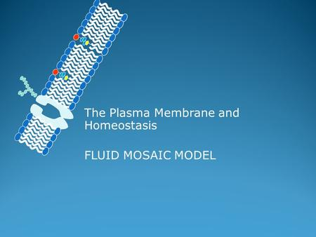 The Plasma Membrane and Homeostasis FLUID MOSAIC MODEL.