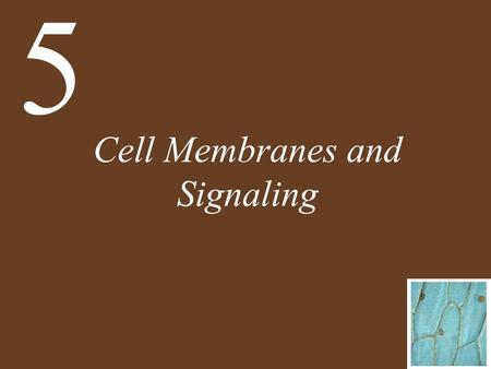 Cell Membranes and Signaling 5. Chapter 5 Cell Membranes and Signaling Key Concepts 5.1 Biological Membranes Have a Common Structure and Are Fluid 5.2.