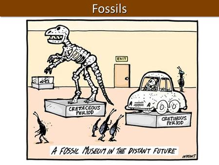 FossilsFossils. Question of the Day Question: How much of a 100g uranium sample is left after 2 half lives? Answer: ……… Turn In: - p. 588 CYU 1 – 6 -Half.