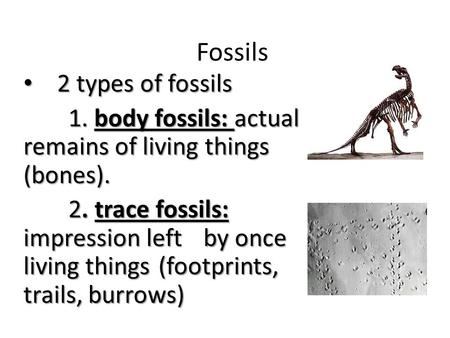 Fossils 2 types of fossils 2 types of fossils 1. body fossils: actual remains of living things (bones). 2. trace fossils: impression left by once living.