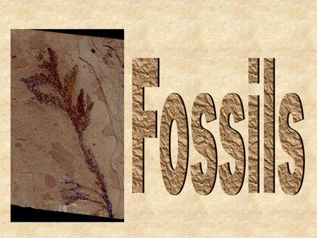 Plant Fossils Animal Fossils What are fossils? Fossils are the remains (or traces) of dead plants or animals from long ago that have been preserved.