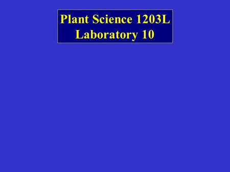 Plant Science 1203L Laboratory 10. Prop roots and sheathing leaf bases (no petioles)