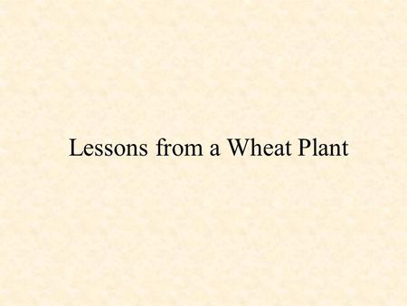 Lessons from a Wheat Plant. Principal grain crops of the Palestine area: wheat and barley BARLEY WHEAT.