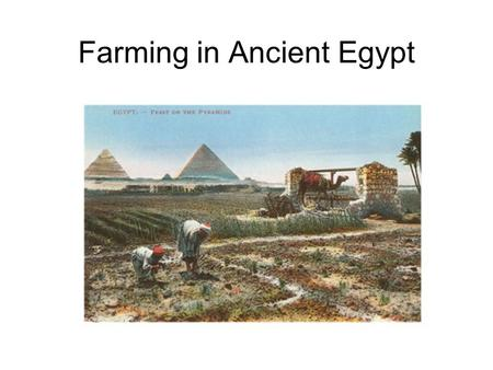 how did ancient egyptians affect the environment Destruction of egyptian cultural heritage: environmental population  one of the  main focuses of this rescue effort was the two temples of  even so, it is not  entirely safe forever as some of the site has been affected by high.