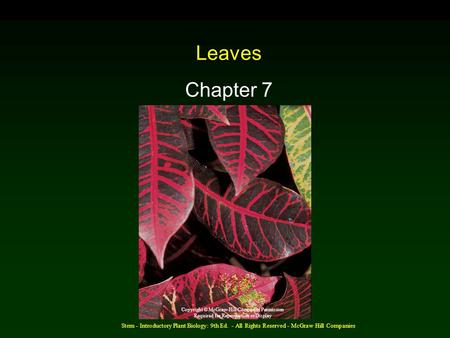 Stern - Introductory Plant Biology: 9th Ed. - All Rights Reserved - McGraw Hill Companies Leaves Chapter 7 Copyright © McGraw-Hill Companies Permission.