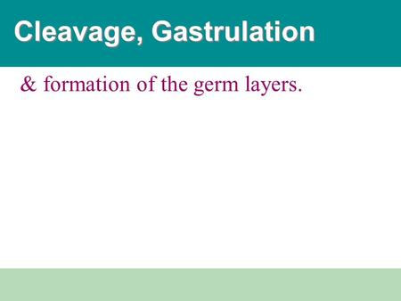 & formation of the germ layers. Cleavage, Gastrulation.