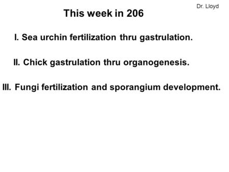 This week in 206 I. Sea urchin fertilization thru gastrulation. II. Chick gastrulation thru organogenesis. III. Fungi fertilization and sporangium development.