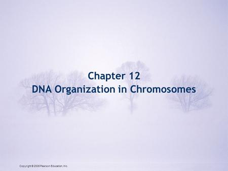Copyright © 2009 Pearson Education, Inc. Chapter 12 DNA Organization in Chromosomes Copyright © 2009 Pearson Education, Inc.
