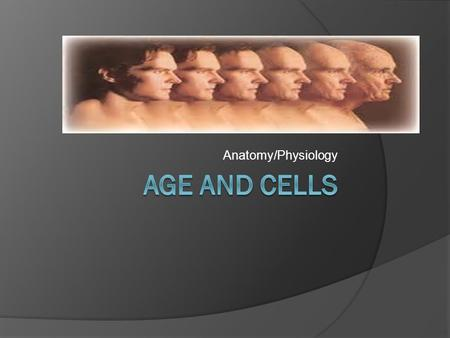 Anatomy/Physiology. Geriatrics-care of elderly and their medical problems What causes cells to age? 1. Genetic clock-most cells go through mitosis except.