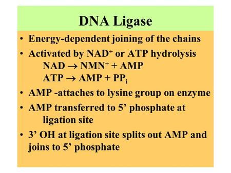 DNA Ligase Energy-dependent joining of the chains Activated by NAD + or ATP hydrolysis NAD  NMN + + AMP ATP  AMP + PP i AMP -attaches to lysine group.