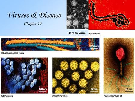 Viruses & Disease Chapter 19 Herpes virus. Virus- Latin for poison 1.A virus is a non-living particle made up of a.genetic material (DNA or RNA; NOT both)