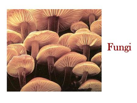 Fungi. -Found in the Domain Eukarya. -The study of fungi is Mycology. -Examples include molds, mildew, mushrooms, toadstools, rusts, baker's yeast and.