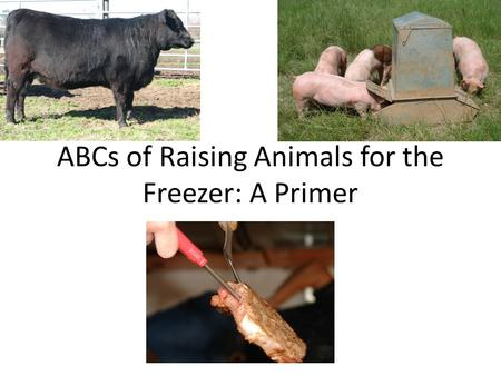 ABCs of Raising Animals for the Freezer: A Primer.