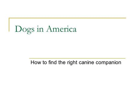 Dogs in America How to find the right canine companion.
