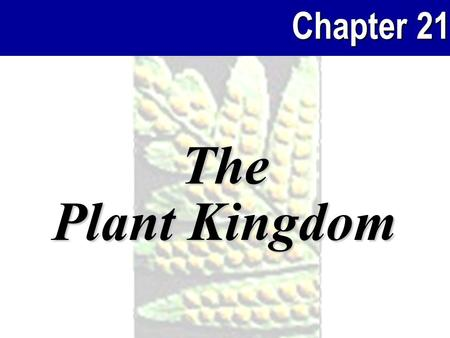Chapter 21 The Plant Kingdom. Chapter 21 2Plants Plants and people Plants, medicines, and bioprospecting The roles of plants in the ecosystem The evolutionary.