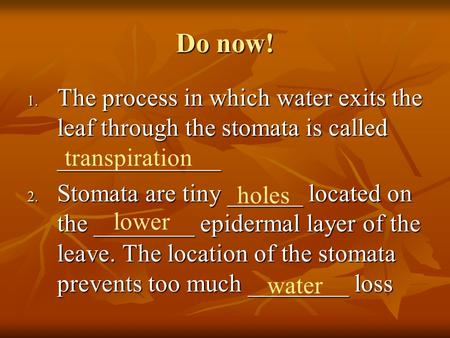 Do now! 1. The process in which water exits the leaf through the stomata is called _____________ 2. Stomata are tiny ______ located on the ________ epidermal.