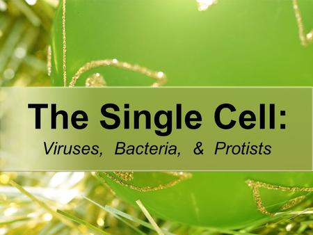 The Single Cell: Viruses, Bacteria, & Protists. Why are levels of organization important? What do you notice as the levels go from atom to organism? Once.