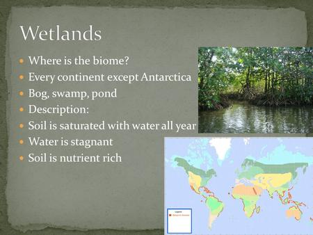 Where is the biome? Every continent except Antarctica Bog, swamp, pond Description: Soil is saturated with water all year Water is stagnant Soil is nutrient.