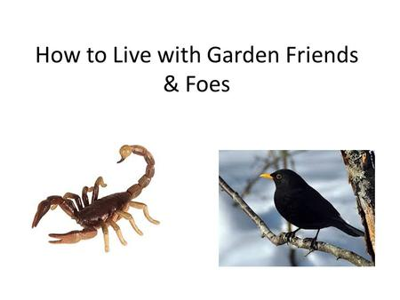 How to Live with Garden Friends & Foes. Bio Diversity at Chelsea.