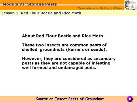 About Red Flour Beetle and Rice Moth These two insects are common pests of shelled groundnuts (kernels or seeds). However, they are considered as secondary.
