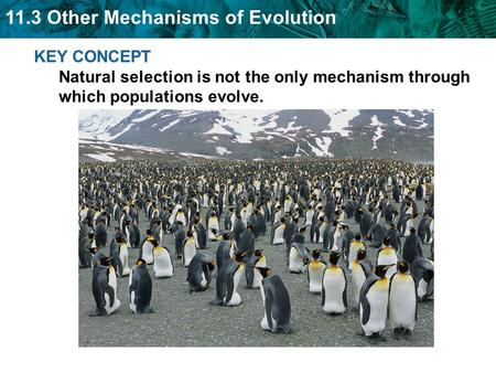 11.3 Other Mechanisms of Evolution KEY CONCEPT Natural selection is not the only mechanism through which populations evolve.