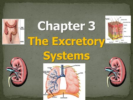 The Excretory Systems. Excretion is the process of removing metabolic wastes. StateBody Systems involved in excretion Main Organ of excretion Waste product.