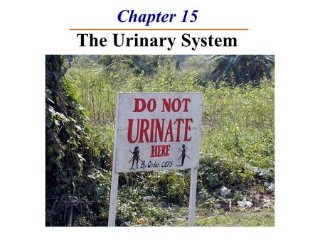 Chapter 15 The Urinary System. Functions of the Urinary System 1. Elimination of waste  Nitrogenous wastes  Toxins  Drugs 2. Regulates homeostasis.