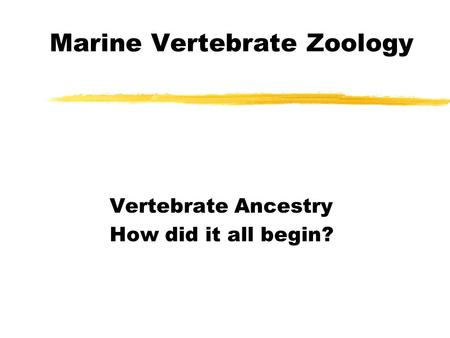 Marine Vertebrate Zoology Vertebrate Ancestry How did it all begin?