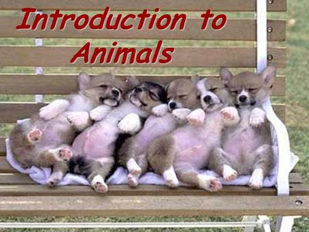 Introduction to Animals. Write the following vocabulary terms in your journals.