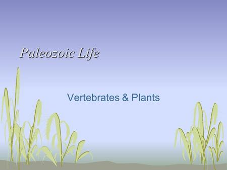 Paleozoic Life Vertebrates & Plants. Paleozoic Vertebrate Introduction Vertebrate evolution Transition from H 2 O to land Time of major extinctions (end.