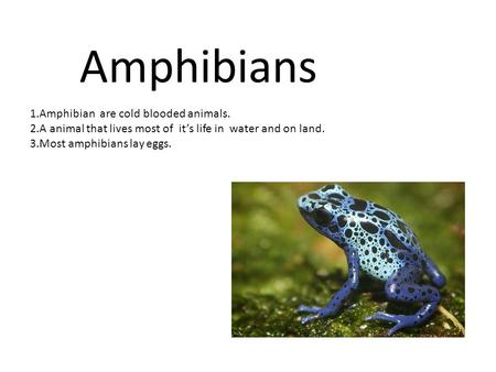 Amphibians 1.Amphibian are cold blooded animals. 2.A animal that lives most of it's life in water and on land. 3.Most amphibians lay eggs.