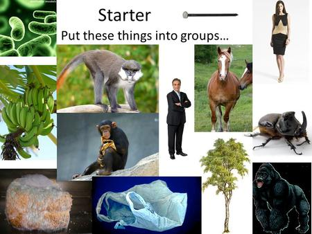 Starter Put these things into groups…. Objectives Outline how organisms are classified and what binomial naming is. Create a key for 10 organisms. Key.