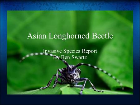 Asian Longhorned Beetle Invasive Species Report By Ben Swartz.