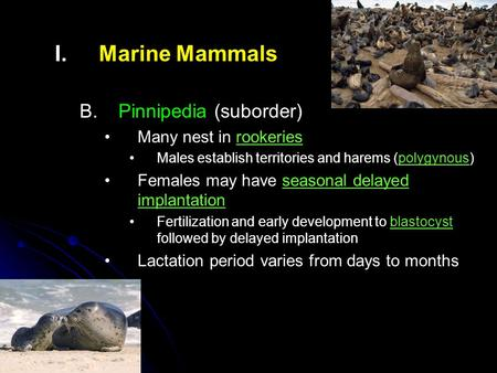 I. I.Marine Mammals B. B.Pinnipedia (suborder) Many nest in rookeries Males establish territories and harems (polygynous) Females may have seasonal delayed.