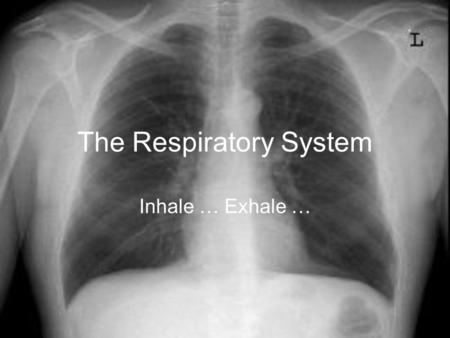 The Respiratory System Inhale … Exhale …. How important is the Respiratory System? How long can you hold your breath?