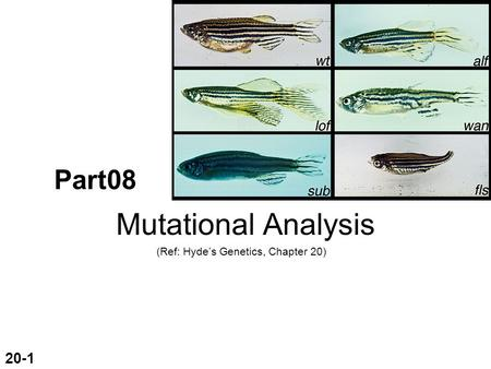Part08 Mutational Analysis (Ref: Hyde's Genetics, Chapter 20) 20-1.