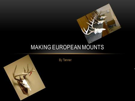 By Tanner MAKING EUROPEAN MOUNTS. WHAT ARE THEY? European mounts are a deer head boiled so that there is just the skull and antlers left.