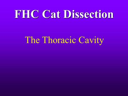 FHC Cat Dissection The Thoracic Cavity.