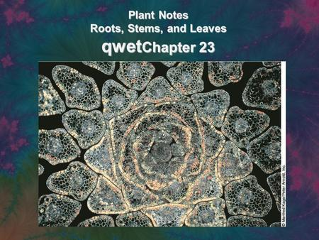 Plant Notes Roots, Stems, and Leaves qwet Chapter 23.