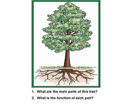1.What are the main parts of this tree? 2.What is the function of each part?
