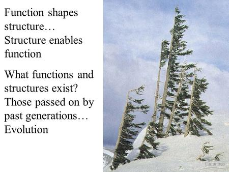 Function shapes structure… Structure enables function What functions and structures exist? Those passed on by past generations… Evolution.