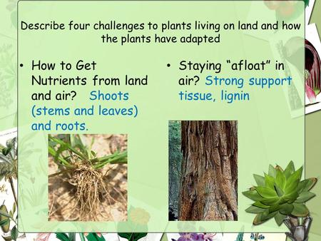 Describe four challenges to plants living on land and how the plants have adapted How to Get Nutrients from land and air? Shoots (stems and leaves) and.