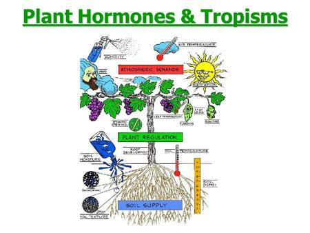"Plant Hormones & Tropisms. Plant hormones ""Hormone"" was first used to describe substances in animals –""a substance produced in a gland that circulates."