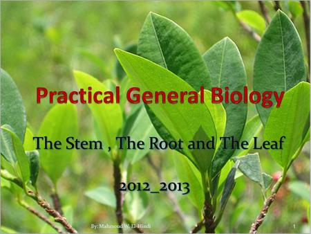 The Stem, The Root and The Leaf The Stem, The Root and The Leaf 2012_2013 1By: Mahmoud W. El-Hindi.