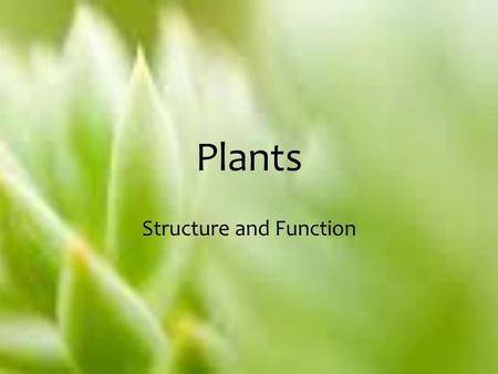Plants Structure and Function. Plants – An Overview Have existed on this planet for nearly 400 million years. Without plants, life on Earth would not.