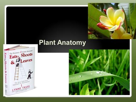 Plant Anatomy Basic Plant Anatomy Root ◦Anchors plant in place and provides nutrition ◦Want high SA/V Ratio Shoot (stem) ◦Consists of stems, leaves,
