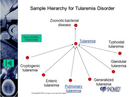 Copyright © 2001 College of American Pathologists Sample Hierarchy for Tularemia Disorder Zoonotic bacterial disease Enteric tularemia Glandular tularemia.