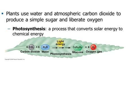 Carbon dioxide C 6 H 12 O 6 Photosynthesis H2OH2O CO 2 O2O2 Water + 66 Light energy Oxygen gas Glucose + 6  Plants use water and atmospheric carbon dioxide.